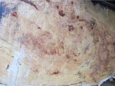 Spalted Wood Example